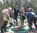 Юрий Цкипури посадил в Керчи сакуру