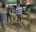 Администрация Тулы: «Если деревья погибнут, подрядчик высадит новые»
