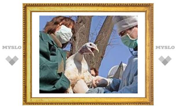 В Туле прививают домашнюю птицу от гриппа