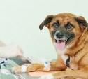 Тульский приют «Любимец» приглашает к сотрудничеству ветеринаров