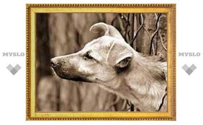 В Туле отстреляли домашних собак