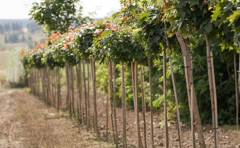 Осенью в Туле высадят 7500 кустарников, 400 деревьев и 45 тысяч цветов