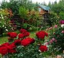 Май – время обработок: полезные советы садовникам