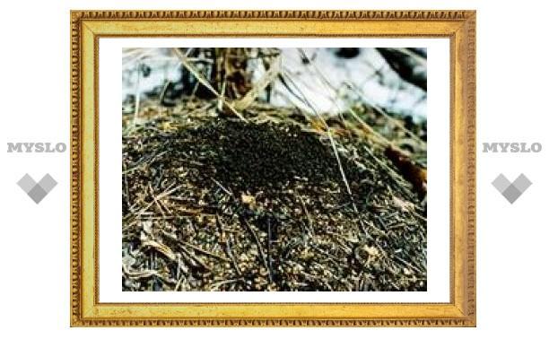 25 марта: Смотри на снег у муравейника
