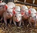 «Тульская мясная компания» произвела 70% свинины в регионе