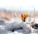 С 20 марта начинается астрономическая весна