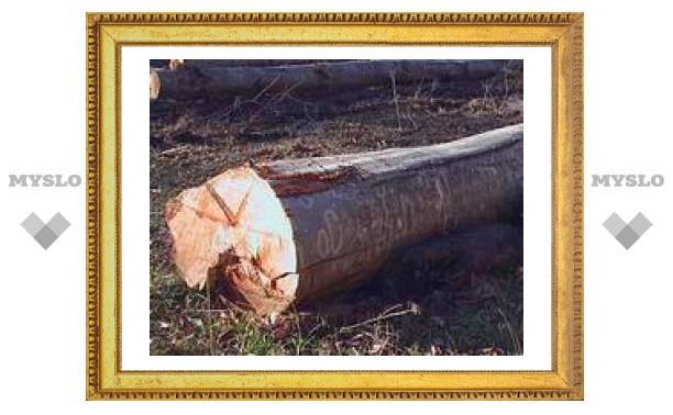 Под Тулой незаконно вырубают лес
