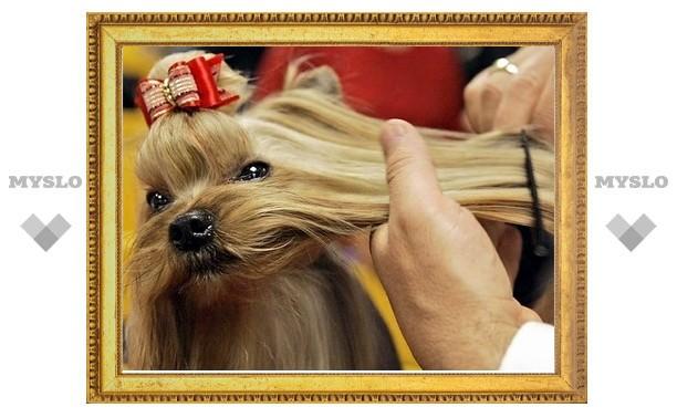 В Туле выберут самую красивую собаку