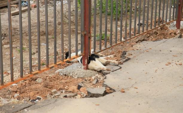 Догхантеры убили собак на Зеленстрое?