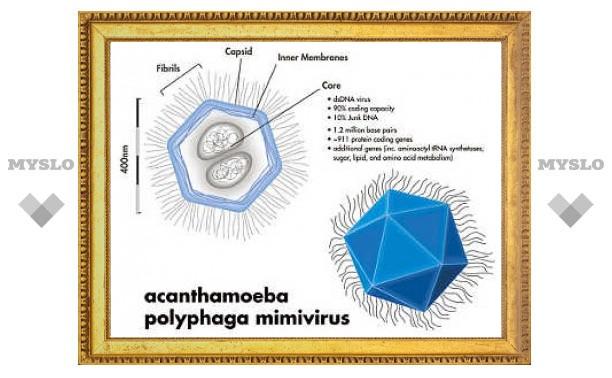 Ученые нашли вирус-гигант