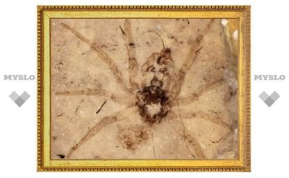 Палеонтологи обнаружили древнего паука