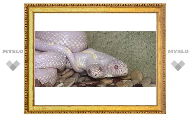 В Тулу привезли двухголовую змею