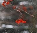 Погода в Туле 24 ноября: облачно с прояснениями, до -5 и без осадков