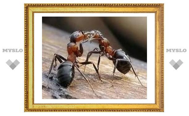 4 мая: Чистый и сытый муравей - к урожаю