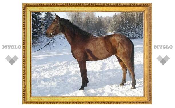 Под Тулой в Сочельник украли лошадь