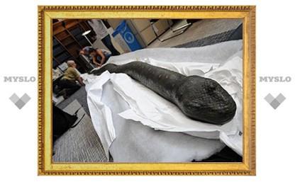 Британское министерство иностранных дел раскритиковали за реставрацию чучела змеи