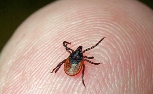 МЧС напоминает тулякам, как защититься от клещей