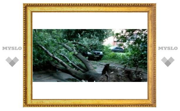 В Туле упало 110 деревьев