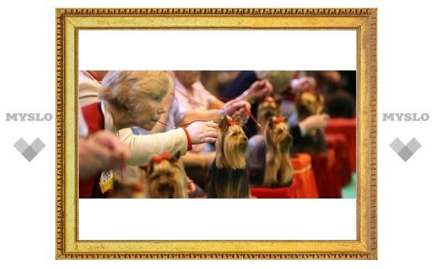 Туляков приглашают на выставку собак