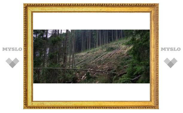 Под Тулой незаконно вырубили лес