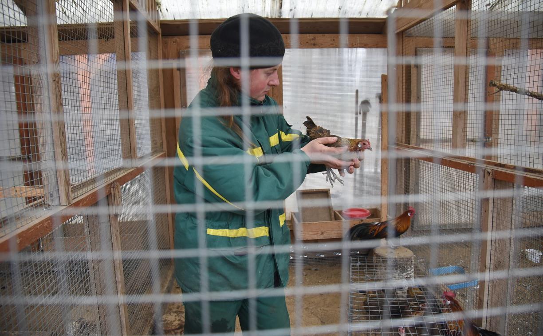 Обитатели зооуголка Белоусовского парка готовятся к зиме: фоторепортаж