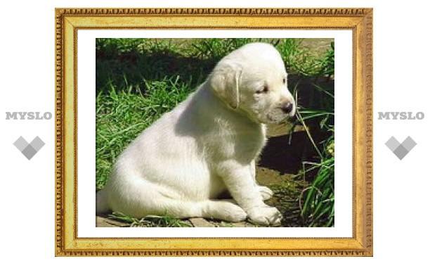 В США началось клонирование собак