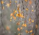 Погода в Туле 9 ноября: облачно, холодно, небольшие осадки