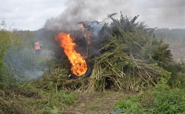 В Тульской области полицейские сожгли 10 тысяч кустов конопли