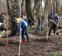 В Рогожинском парке высадили саженцы берёз и лип