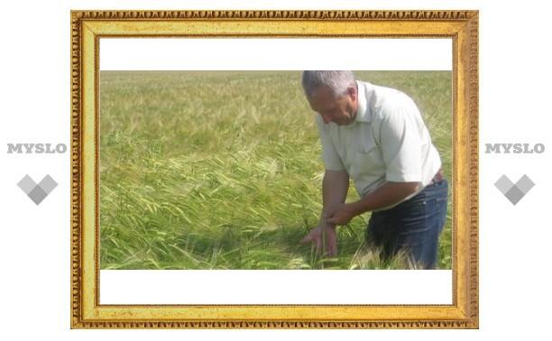 Туляки воруют зерновые