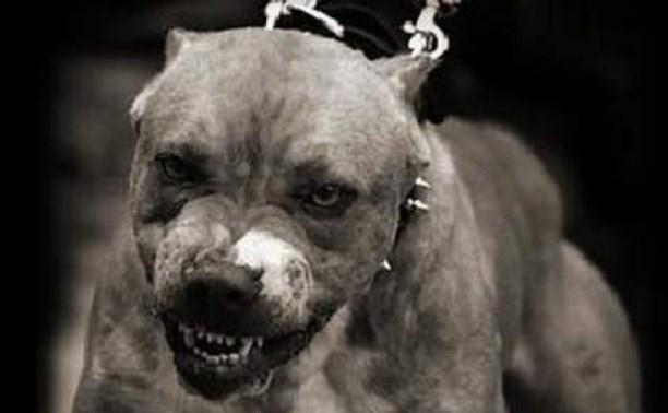 В Госдуме предложили сделать обязательной страховку для владельцев бойцовых собак
