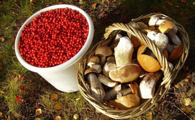 Россиянам разрешат свободно собирать ягоды и грибы