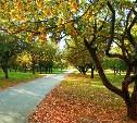 Погода в Туле 20 октября: тихо, прохладно и без осадков
