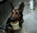 Попрошаек с животными будут штрафовать или наказывать трудом