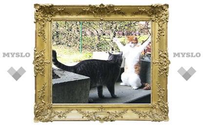 Как утихомирить мартовских котов