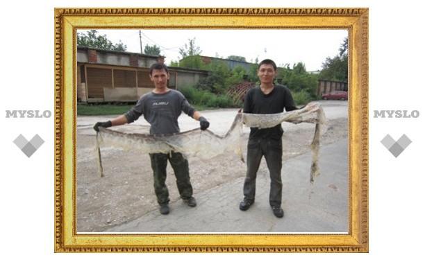 В Туле поселились трехметровые питоны