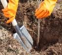 В Белёвском лесничестве посадят 13 000 деревьев