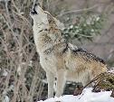 Волк – 200 рублей, голубь – 600: тулякам напомнили размеры штрафов за сбитых животных