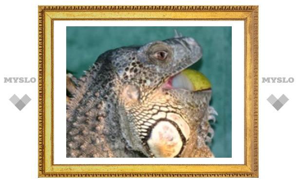 Тулякам показали, как едят экзотические животные