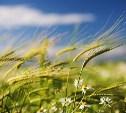 МЧС предупреждает туляков о сильном ветре
