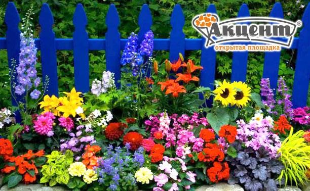 Разнообразие цветов и хвойников для вашего сада