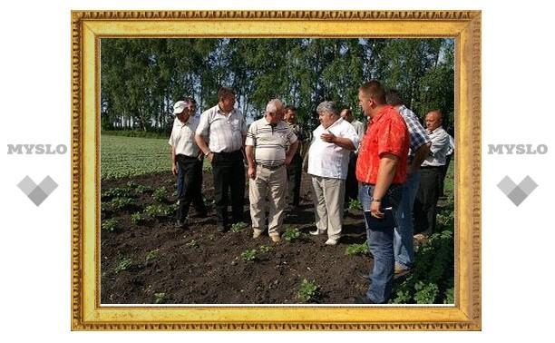 В Тульской области в четыре раза увеличен посев масличных культур