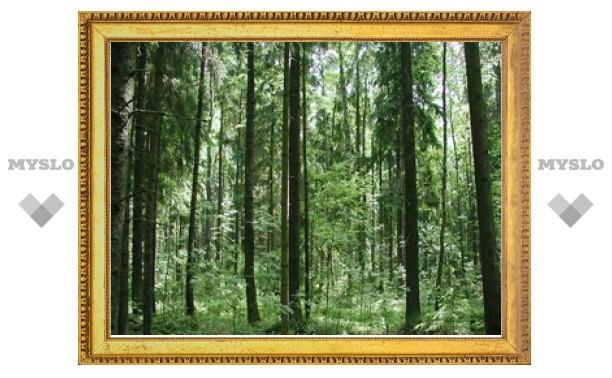 Тульское правительство взялось за восстановление лесов в регионе