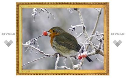 Выходные 24-25 декабря в Туле будут морозными