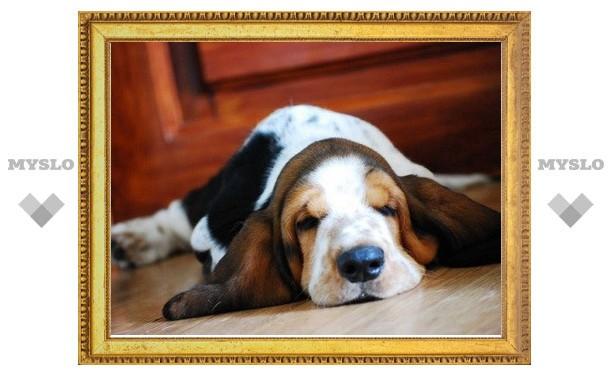 Домашних собак будет необходимо регистрировать по месту жительства