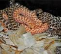 В Тульском экзотариуме змеи впали в зимнюю спячку