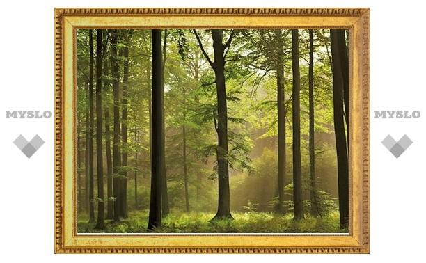 В Тульской области пересчитают лесной фонд