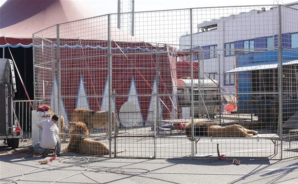 Возле «Линии» начали монтировать арену Цирка огромных зверей