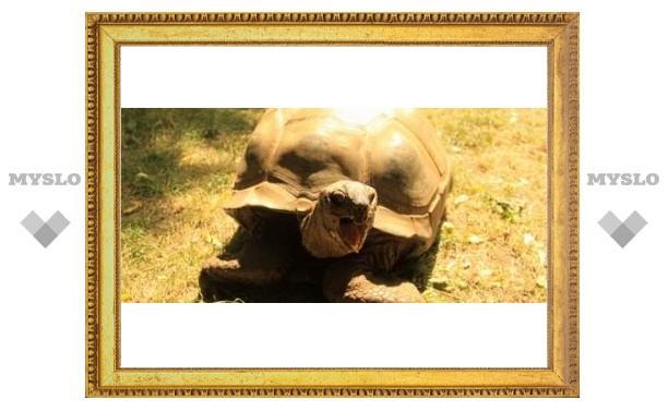 В Тулу привезли гигантскую черепаху