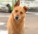 Щекинец заплатит 400 рублей за убийство собаки